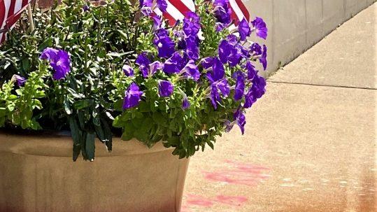 Vernas flowers